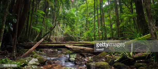 Rainforest Stream Panorama