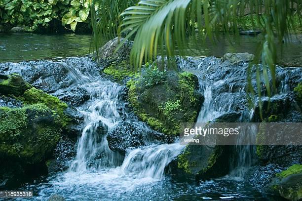 ruisseau de la forêt tropicale - karesansui photos et images de collection