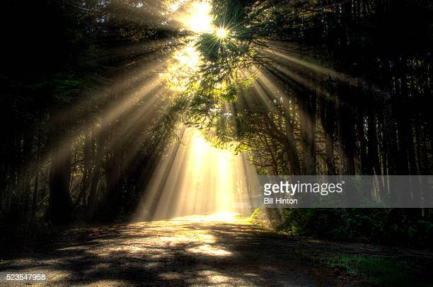 Rainforest Sunburst Rays, Olympic National Park, Washington State