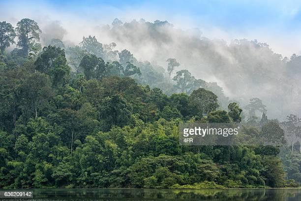 rainforest sunrise, khao sok national park, thailand - kao sok national park stock pictures, royalty-free photos & images