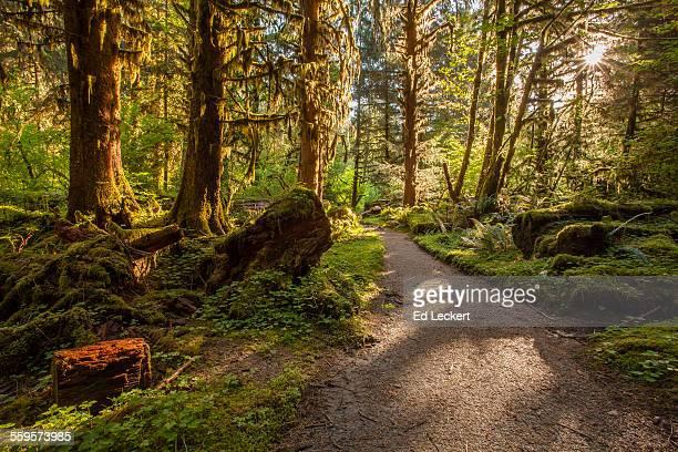 Rainforest Trail, Olympic National Park