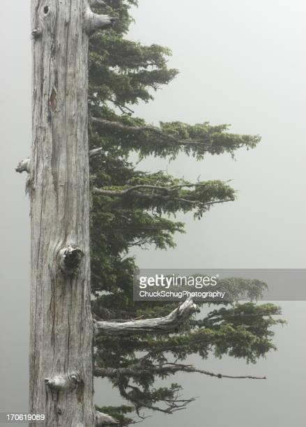 Rainforest Tree Branch Fog