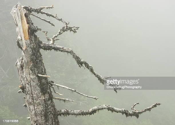Rainforest Tree Branch Moss Fog