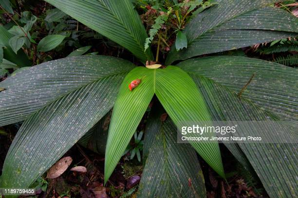 rainforest vegetation - christopher jimenez nature photo stock pictures, royalty-free photos & images