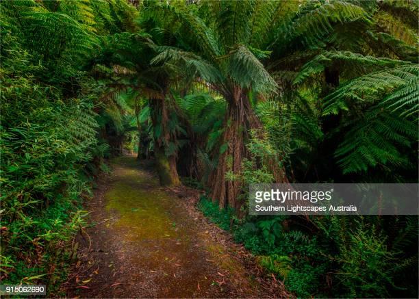 Rainforest walking track through fern glades, Tarra Bulga National Park, South Gippsland, Victoria.