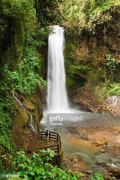 rainforest waterfall - ogphoto stock pictures, royalty-free photos & images
