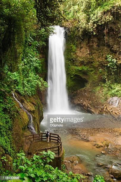 rainforest waterfall - ogphoto stockfoto's en -beelden
