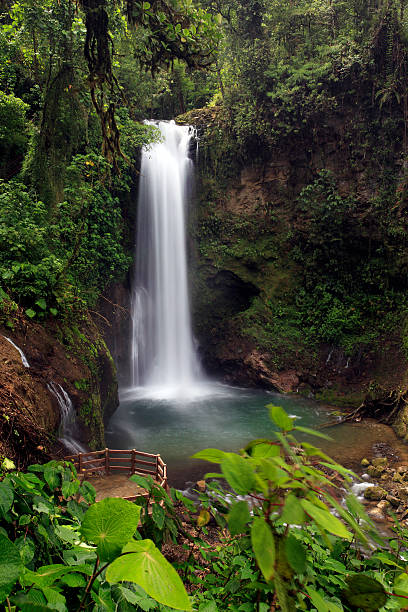 Rainforest Waterfall Wall Art