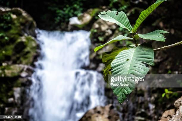 rainforest waterfall with foliage in costa rica - robb reece stock-fotos und bilder
