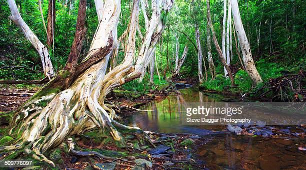 Rainforrest Stream