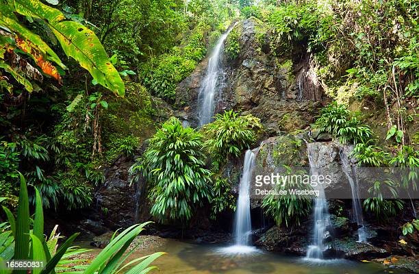 raining at the waterfall - trinidad and tobago stock pictures, royalty-free photos & images