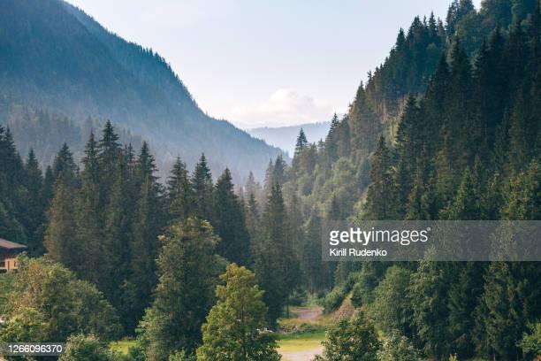 raining in austrian alps - wald stock-fotos und bilder
