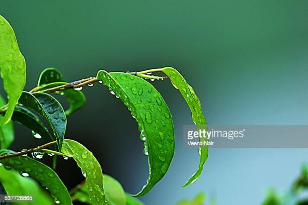 rain-monsoon - monsoon stock pictures, royalty-free photos & images