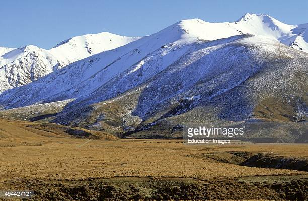 Rainshadow, Fluvia glacial outwash, river terraces, Tussock grassland, note beef cattle, Mountain landforms, East of Arthurs Pass, inland Canterbury,...