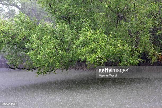 Rainy day in Sundarban Khulna Bangladesh