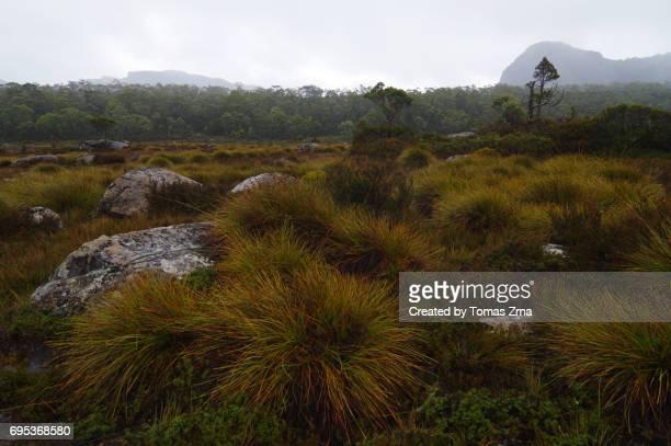Rainy moods in Pelion Gap