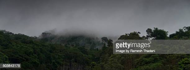 Rainy season in the Amazon Forest