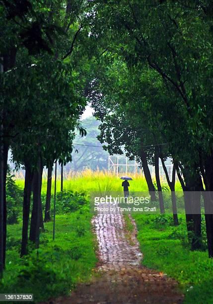 rainy walk - savar stock pictures, royalty-free photos & images