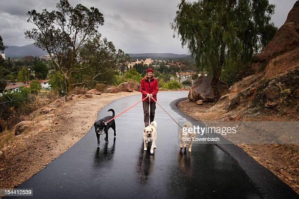 rainy walk - three animals stock pictures, royalty-free photos & images