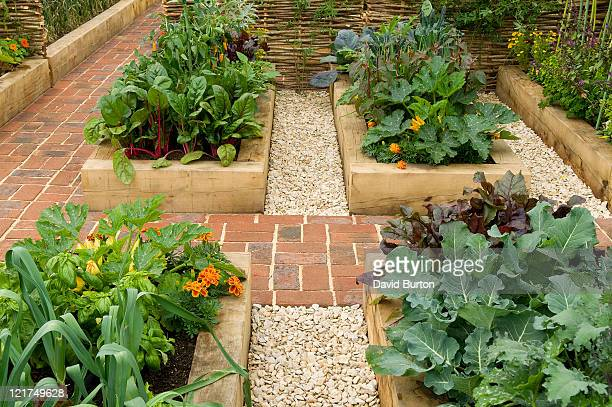 raised beds in potager garden - paving stone stock pictures, royalty-free photos & images