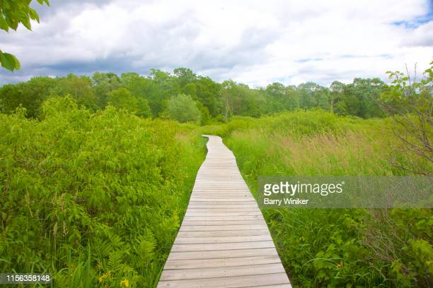 raised boardwalk through wetland environment in springtime - barry wood stock pictures, royalty-free photos & images
