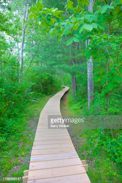 raised boardwalk through wetland environment - barry wood stock pictures, royalty-free photos & images