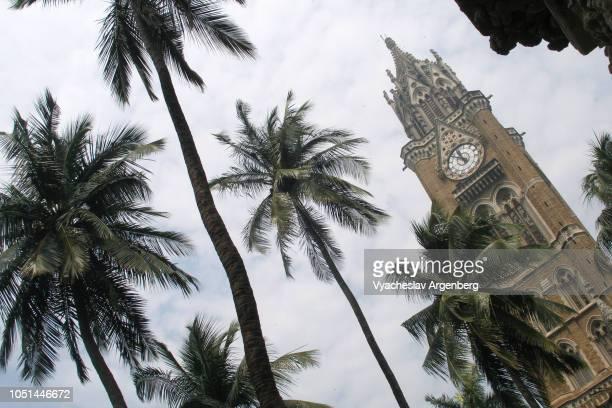 rajabai clock tower and palm trees, mumbai, india - argenberg fotografías e imágenes de stock
