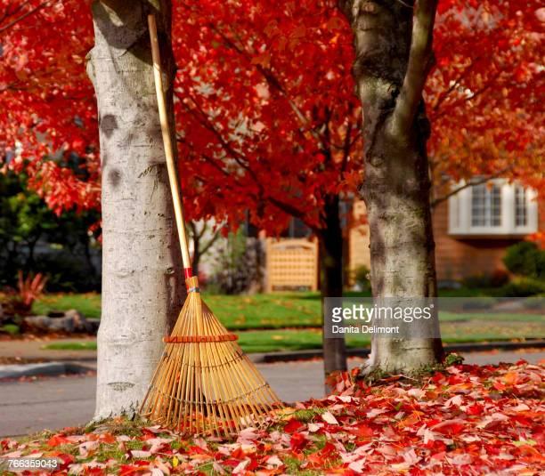 Rake and autumn leaves, Portland, Oregon, USA