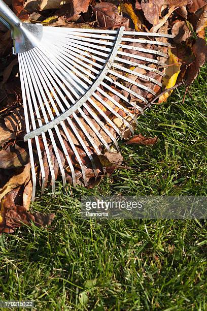 rake, leaves on grass in garden - rake stock pictures, royalty-free photos & images