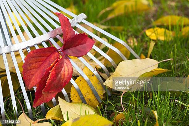 Râteau, feuilles sur l'herbe dans le jardin
