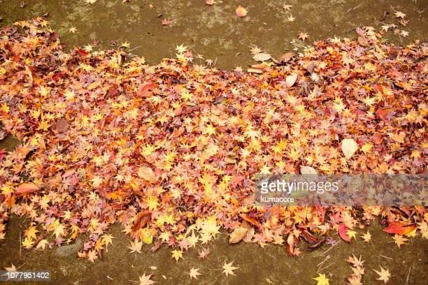 rake  up fallen leaves - mort description physique photos et images de collection