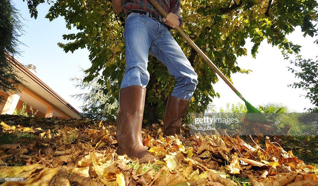 Raking leaves : Stock Photo
