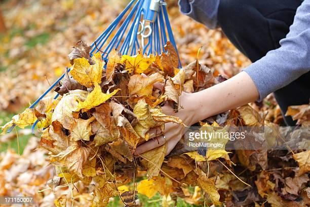 raking leaves - rake stock pictures, royalty-free photos & images
