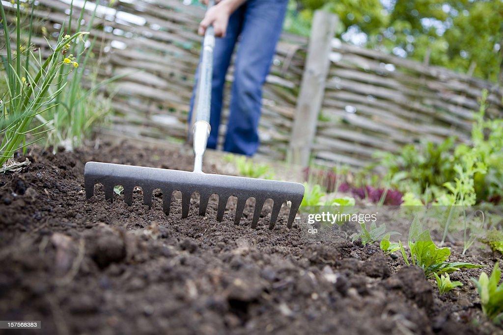 Raking the garden to prepare soil for planting : Stock Photo