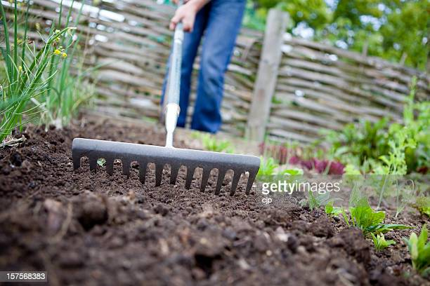 Raking the garden to prepare soil for planting