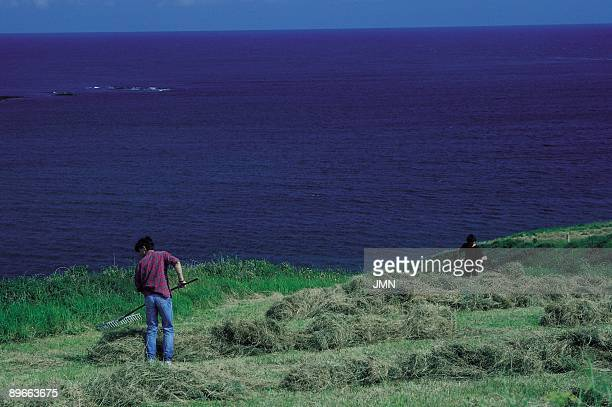 Raking the grass Two farmers rake the grass of a field Figueras Asturias province
