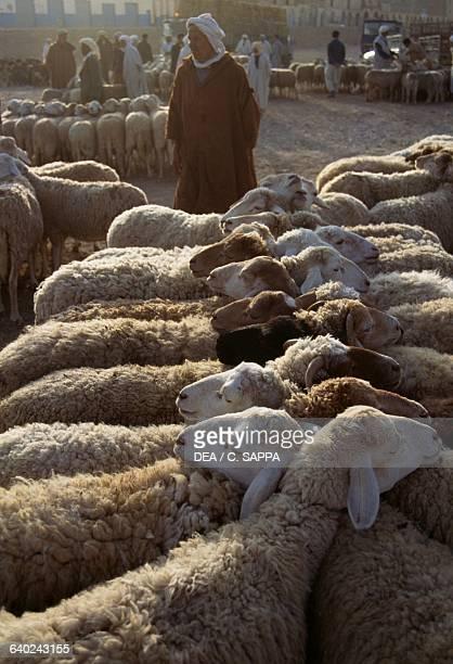 Ram marketplace M'zab Valley Ghardaia Algeria
