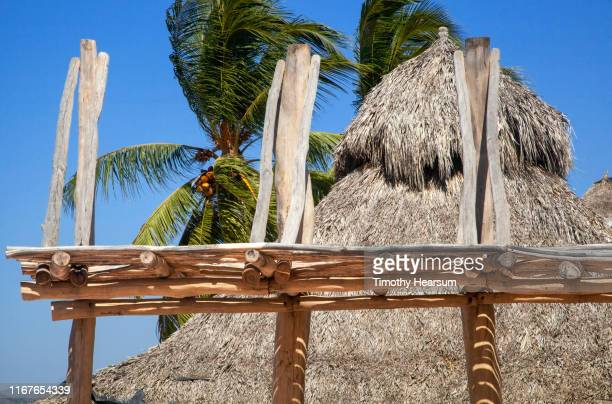 ramada structure in foreground, thatched roof, coconut palm trees and blue sky beyond; costalegre, jalisco, mexico - timothy hearsum stock-fotos und bilder