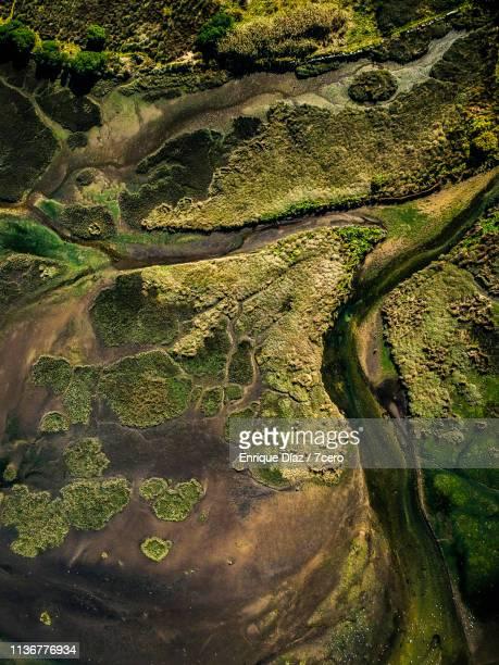 a ramallosa swamp, galicia, spain - galicia fotografías e imágenes de stock