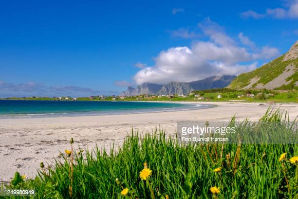 rambergstranda at ramberg in lofoten - northern norway - finn bjurvoll stock pictures, royalty-free photos & images