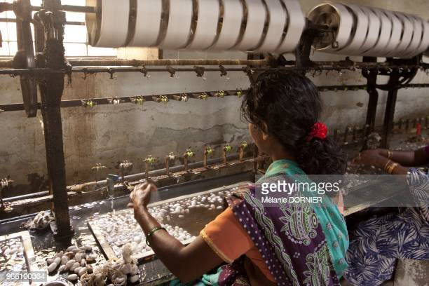 Ramenagar en juin 2013 vue d'ateliers de filature ou le cocon est transforme en un filament de soie Le cocon est trempee dans de l'eau bouillante...