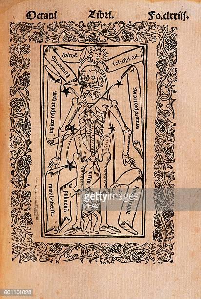 Ramon Llull Spanish writer and philosopher Practica Compendiosa Artis Raymundi Lulli 1523 Book 8 Medicine subject Description of the human skeleton