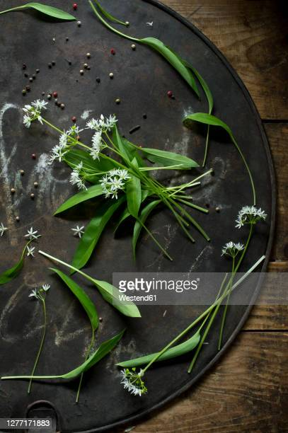 ramson and peppercorns on rustic baking sheet - ail des ours photos et images de collection