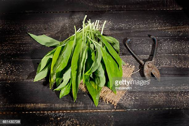 Ramson and scissors on dark wood