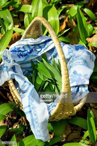 ramson in basket - ail des ours photos et images de collection