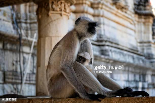 ranakpur jain temple near jodhpur, rajasthan, india - jain stock photos and pictures