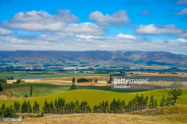 a ranch at geraldine-fairlie highway, new zealand - grazing stock pictures, royalty-free photos & images
