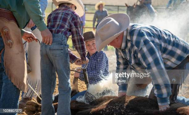 ranch family teaches younster about livestock branding - livestock branding stock photos and pictures