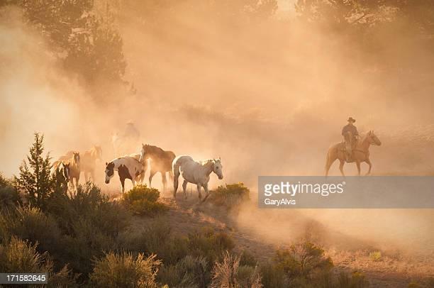 Ranch manos que más de un manada de caballos en puesta de sol.