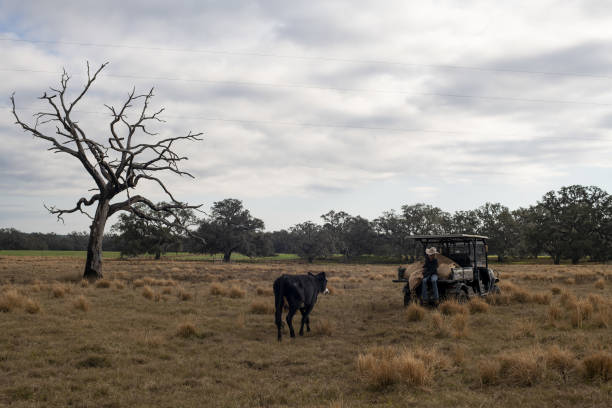 FL: Barthle Brothers Cattle Ranch As USDA Releases Cattle Report